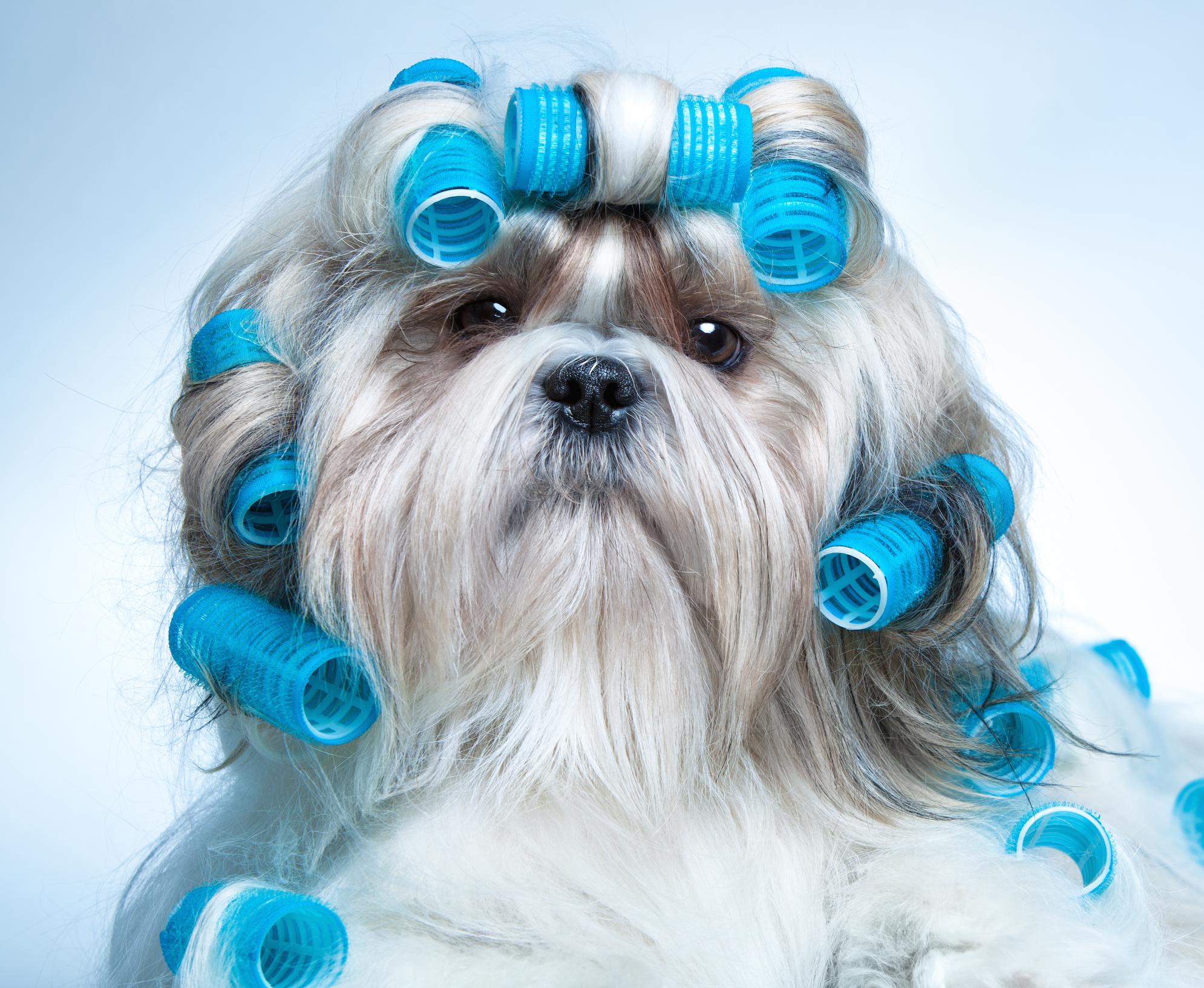 peluquería y estética canina - academia victoria